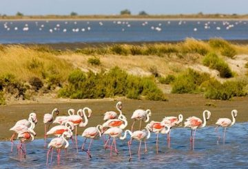 Pink flamingos on salt lagoons
