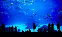 "Visit to the Aquarium in Montpellier ""Mare Nostrum"""